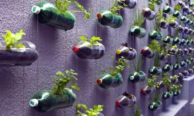 Пластиковые бутылки в роли горшков для растений