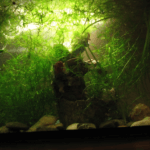 Светодиодный светильник для аквариума своими руками
