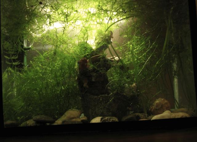 Погружаем в аквариум светодионый светильник